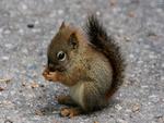 squirrel-10126-2560x1600.jpg