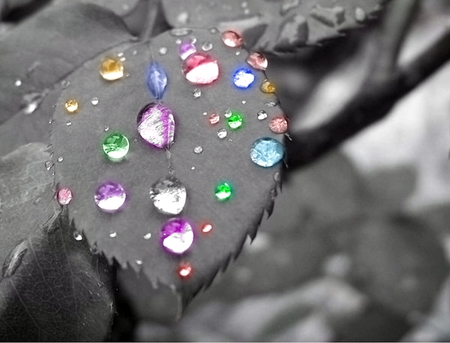 Grey Leaf With Colorful Drops