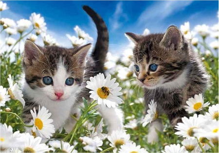 Cute kittens - cute, margarita, flower, garden, cat, kitten, daisy, animal