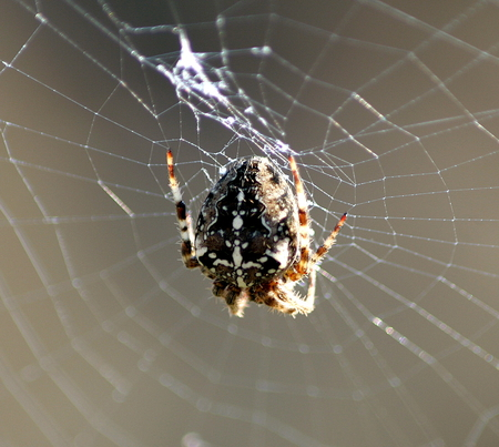 Constructing a Web - spider, web, insect, bugs