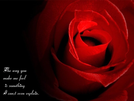 Love Rose Wallpaper With Quotes Flowers Nature Background