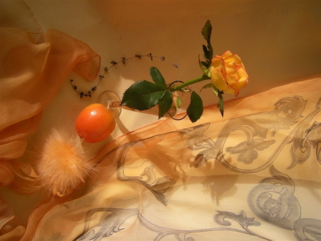 Still life - nice, beautiful, lovely, orange, rose, still life, pretty, lonely, feather, res