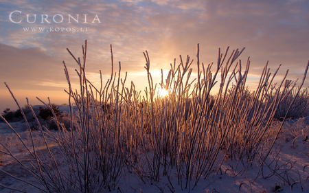 Purple sunset in Curonia in winter - hoar, kurische, curonia, beautiful, magic, snowy, spit, sand, dunes, fabulously, nehrung, beauty, morning, pink, frost, harmony, kopos, curonian, winter, spirit, rime, purple, violet, snowdrifts, nature, white, frozen, landscape