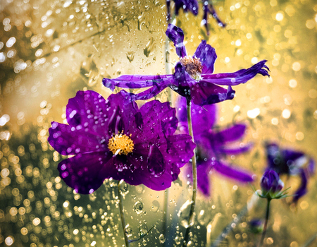 Purple And Gold Other Nature Background Wallpapers On Desktop