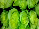 Roses for Dianna(GREENFROGGY1)