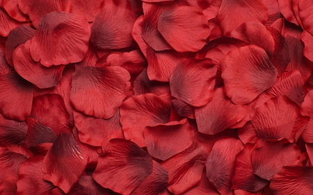 Carpet Of Rose Petals Flowers Nature Background Wallpapers On