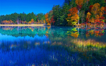 Colors of Autumn Lake - image, background, nice, multicolor, wallpaper, bright, paisage, brightness, tranquil, red, beautiful, seasons, leaves, roots, green, scenery, beije, blue, lakes, peace, paisagem, day, desktop, reflected, pi, branches, pc, scene, orange, yellow, cenario, lagoon, lightness, calm, scenario, beauty, morning, rivers, widescreen, paysage, cena, trees, sky, panorama, water, cool, serenity, awesome, photoshop, landscape, colorful, autumn, laguna, trunks, photography, mirror, light, amazing, photo, multi-coloured, clear, colors, leaf, serene, plants, peaceful, colours, reflections