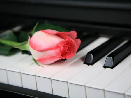 rose on piano - photography  rose  piano  nature  flowerPiano With Rose Photography