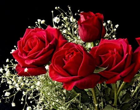 Beautiful Red Roses Flowers Nature Background Wallpapers On