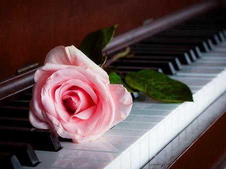 A Rose From Stranger