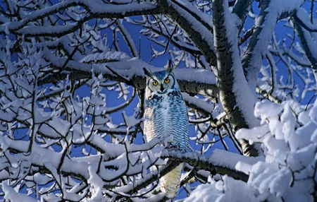 Blue Owl - snow, white, winter, blue, cold, sky, trees, owl