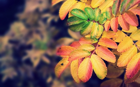 Autumn Leaves - colorful, autumn, nature, leaves