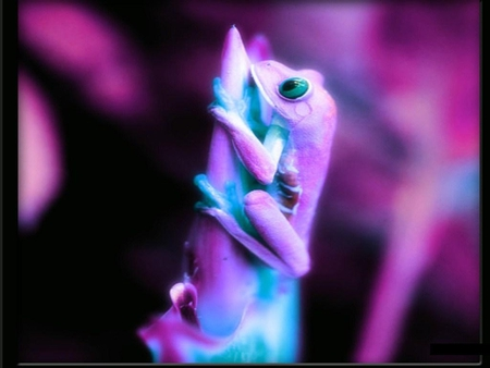 Purple frog - funny animals, adorable, cute, nice, cool, humor, purple, cute animals, funny, purple frog, animals