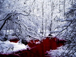 Red forest creek