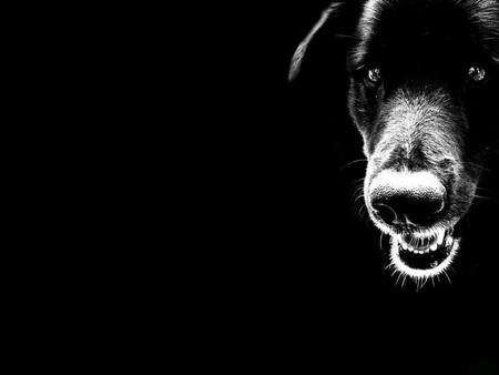 Black Dog 3d And Cg Abstract Background Wallpapers On