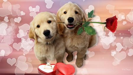 Puppys Love Dogs Animals Background Wallpapers On Desktop Nexus