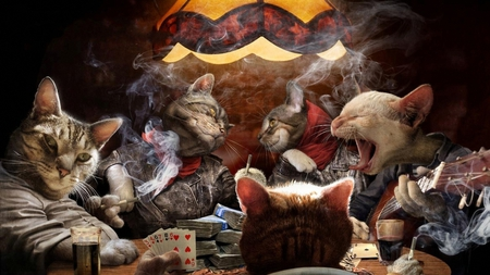 Feline Gangsta's - cats, smoking, table, funny, singing, cards, drinks, money, gangsters, feline, guitar, playing