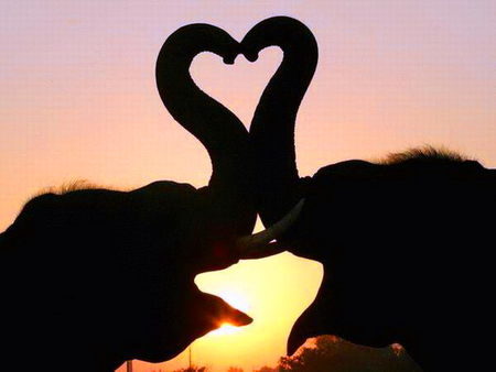 Big Love Elephants Animals Background Wallpapers On