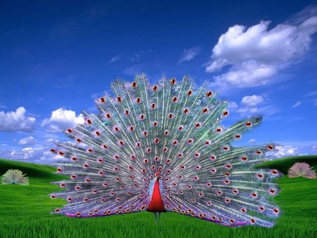 Opera Peacock Fantasy Abstract Background Wallpapers On Desktop