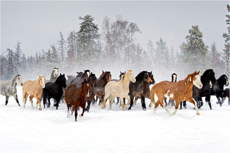 Horses At Winter Horses Animals Background Wallpapers On
