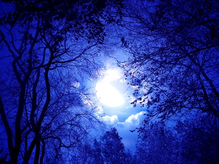 Moonlight Sonnet - photography, dark, forest, dark night, moon, night, blue, sky, sliver, nature, trees, beauty, beautiful, scenery, moonlight, clouds, view, photo, leaves