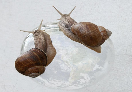 Two snails - globe, funny animals, snails, humorous, cute, nice, shell, funny, animals
