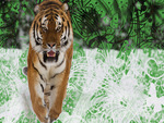 Tiger-Texture background