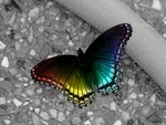 A rainbow colored butterfly