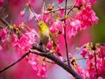 birdie in spring