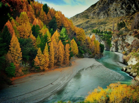 autumn on the river - forest, autumn, new zealand, nature, river, landscape
