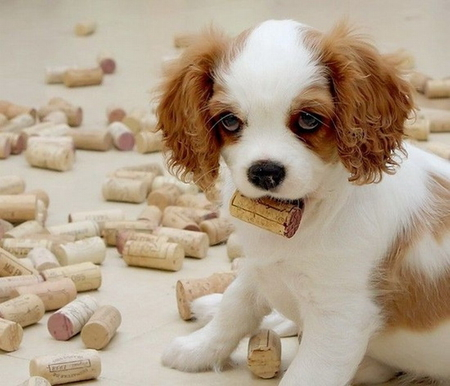LITTLE CORKER - cute, corks, collection, puppy