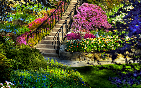Beautiful Garden - beauty, colorful, flowers, stone, pretty, lawn, beautiful, colourful, butchart, trees, nature, amazing, blue flowers, handrail, lawns, peaceful, heaven, path, colorful flowers, colours, upwards, view, grass, blossom, colors, staircase, colorful garden, splendor, tree, spring time, garden, lovely, bank, plants, blue, spring, shrubs, green, stairs, way, rocks, gardens, steps, mountains