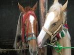 LOVELY HORSES!!