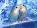 Bird's love