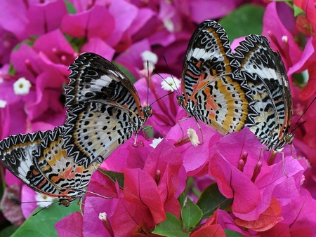 Butterflies on flowers.