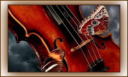 ღViolin Wingsღ - emotions, wings, theater, romantic, alluring, sonnets, violin, bliss, love, melody, strings, sentimental, angelic, romance, feelings, butterflies, notes, in love