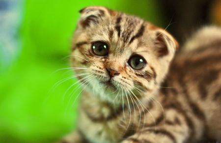 Little cute,sad Face - Cats & Animals Background ... Sad Animal Face