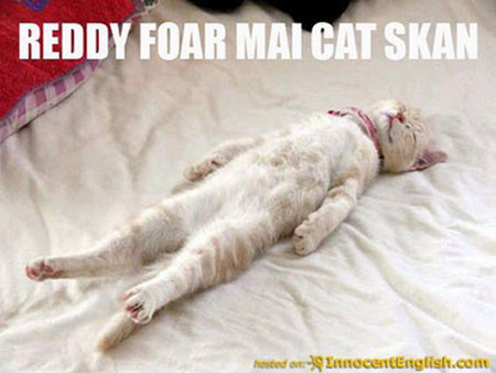 CAT SCAN - scan, funny, ready, cat