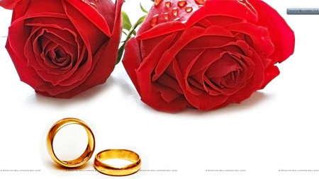 Red Roses With Golden Wedding Rings