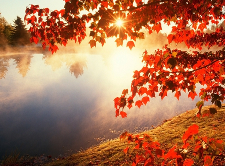 Autumn River - Rivers & Nature Background Wallpapers on ...
