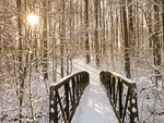 A Bridge in the Snow