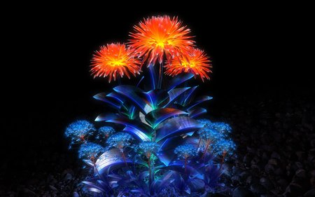 Shining - shining, flower