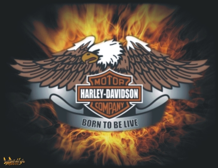 harley davidson born to be live other motorcycles background