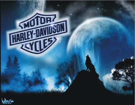 Harley-Davidson loup - logo, motorcycle, nuit, blue, wolf, loup, night, harley davidson