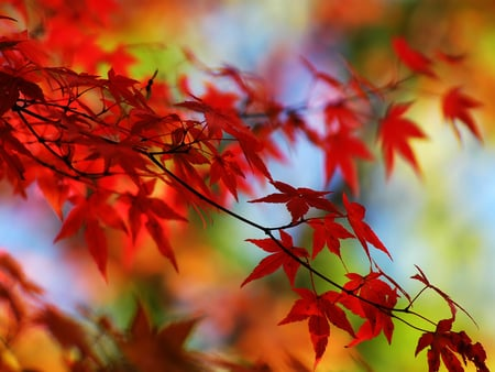 Autumn Leaves - red, leaves, fall, autumn