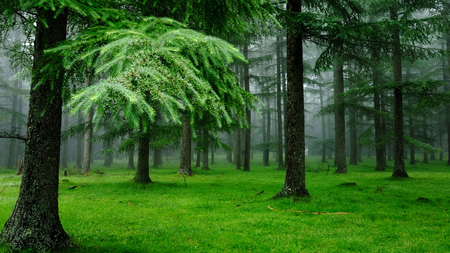 Relaxing Green Forests Amp Nature Background Wallpapers On