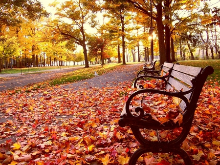 autumn bench - colors, leaves, season, trees