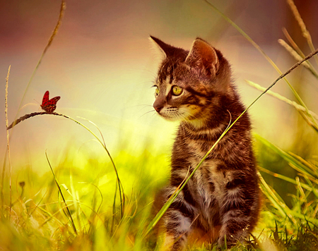 Cat And Butterfly Wallpaper Hd Best Image Of Butterfly Imagevet Co