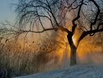 Frosty Morning Sunshine