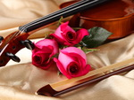 Violine and roses